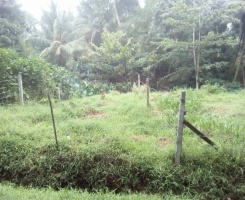 Lewalla, Kandy, ,Land,For Sale,1025