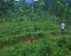 Yatiyanthota, Kegalle, ,Tea land,For Sale,1028